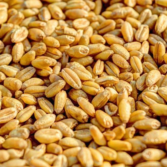 Trigo versus Espelta: ¿Cual de ellos es más nutritivo y saludable?
