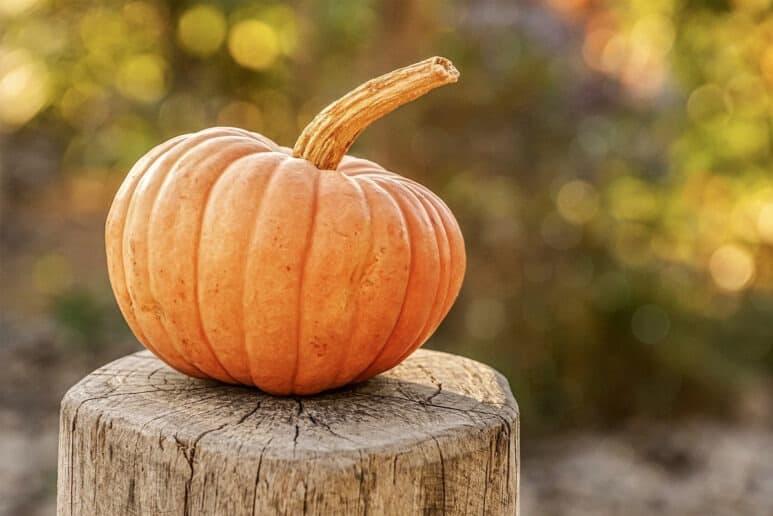 Calabaza cucurbita maxima o de halloween