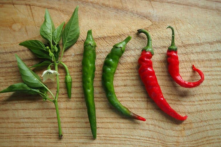 Chiles y jalapeños
